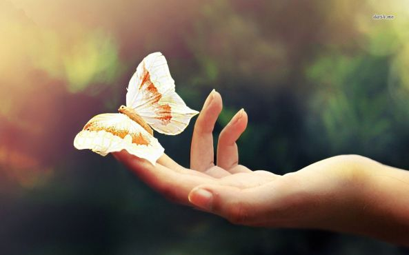 23872-butterfly-on-her-hand-1280x800-animal-wallpaper